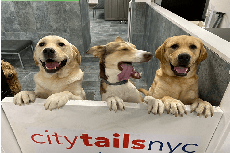 City Tails Doggy Daycare NYC