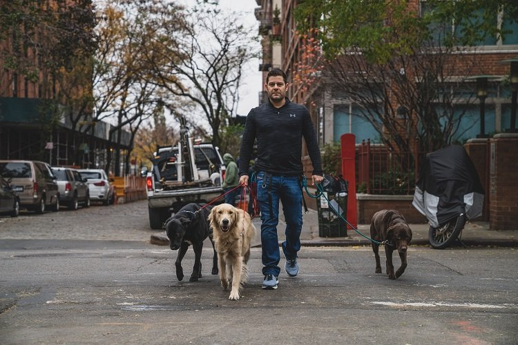 Dog Walking in West Village