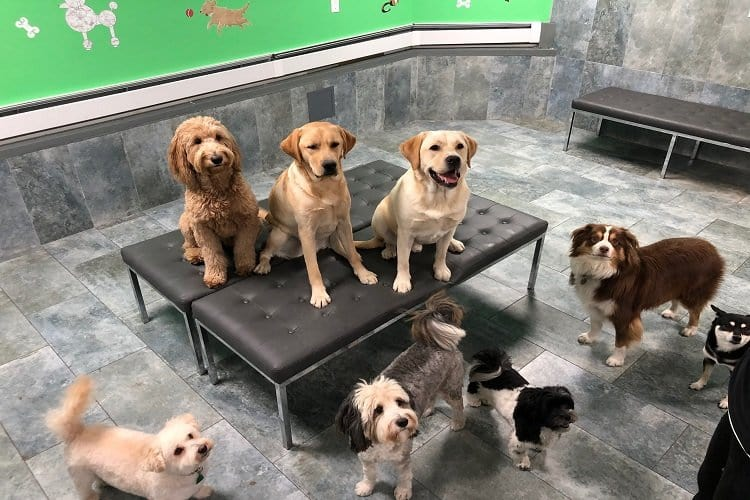 City Tails NYC Dog Day Care