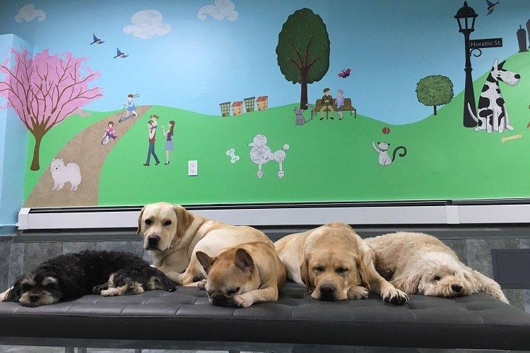dog boarding nyc
