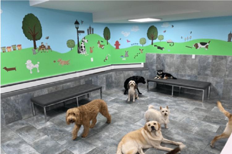 Dog Daycare Near Me