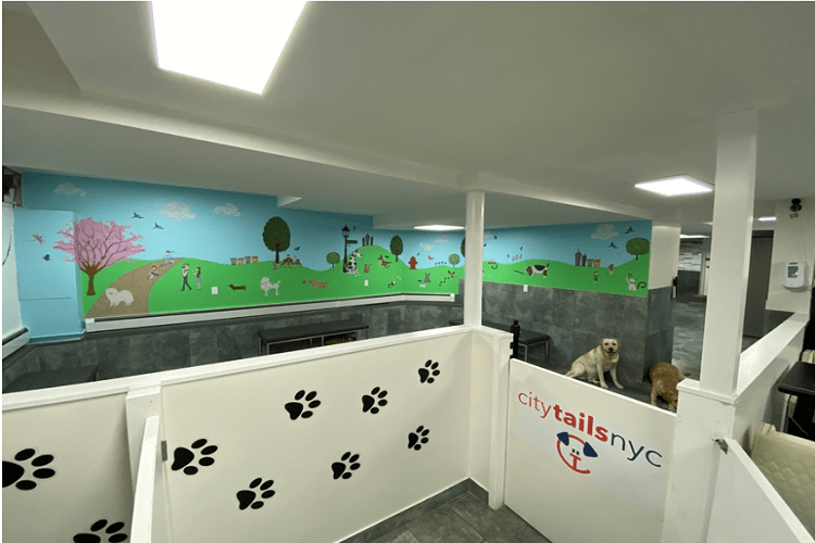 City Tails Dog Daycare NYC