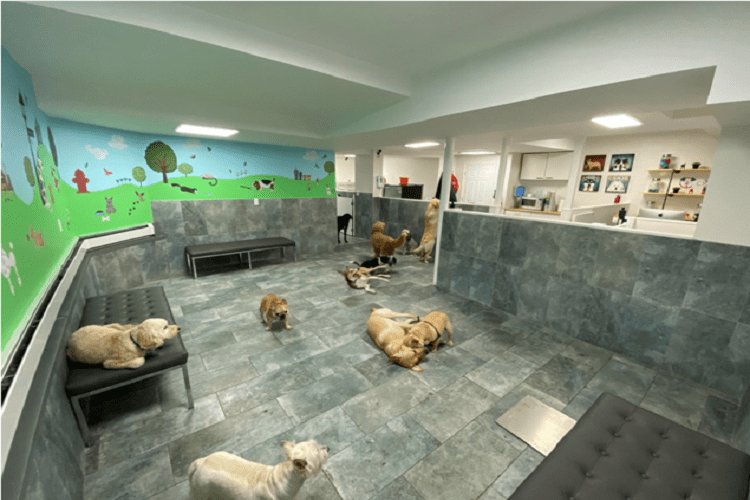City Tails NYC Dog Daycare