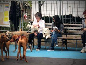 dog-parks-walking-west-village
