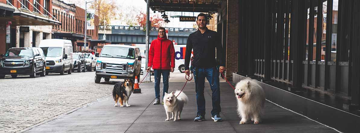 Best Dog Walkers in NYC