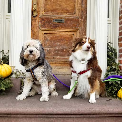 Two dogs sightseeing outside City Tails Dog Day Care