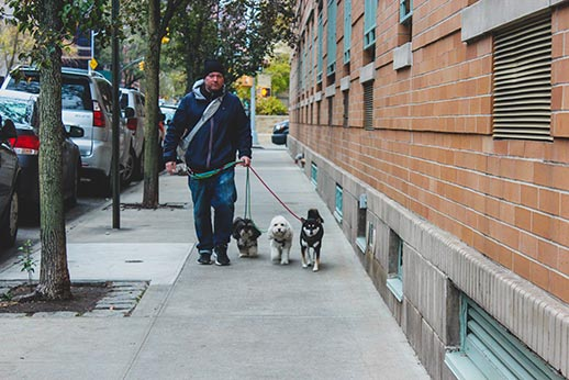 City Tails Dog Walker out for a walk with three NYC dogs