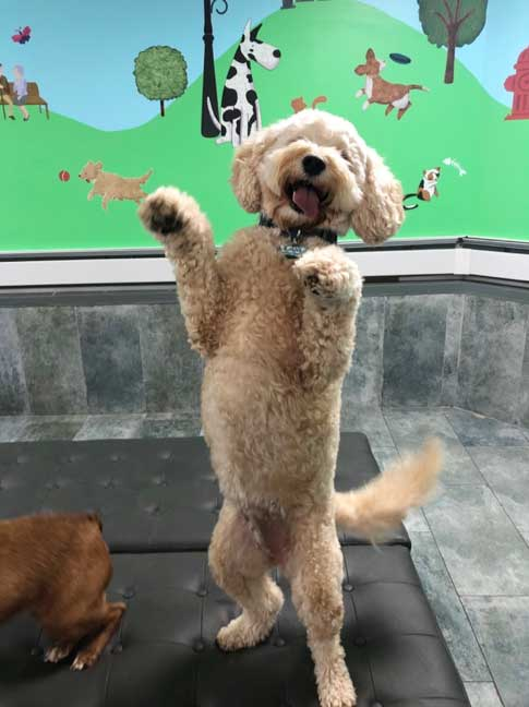 D is for Doggy Daycare NYC