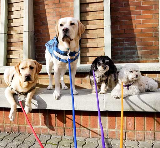 four happy dogs of Dog Day Care