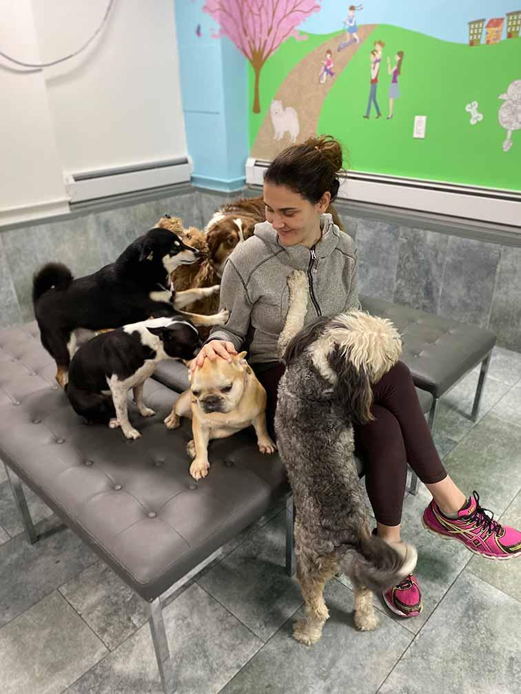 Dog Day Care ruff club