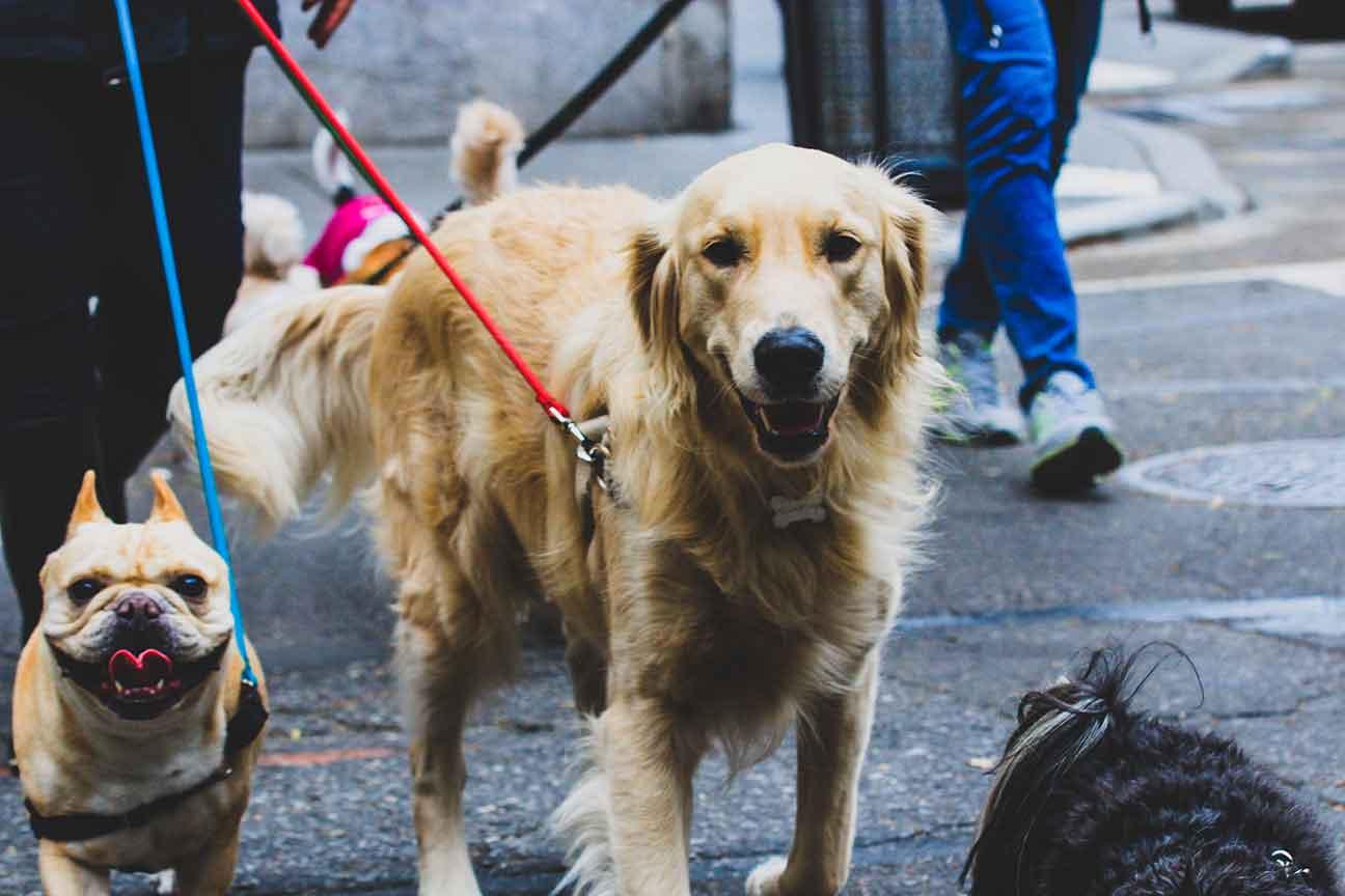 Dog Daycare smiley pets