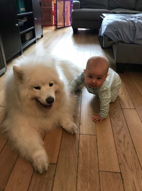 Pet sitting at Doggy Daycare West Village