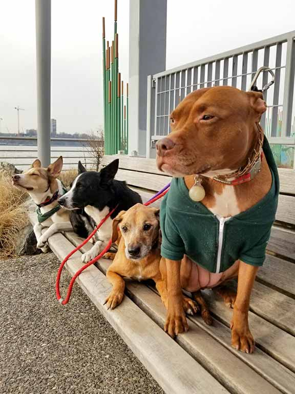 Happy dogs of City Tails NYC