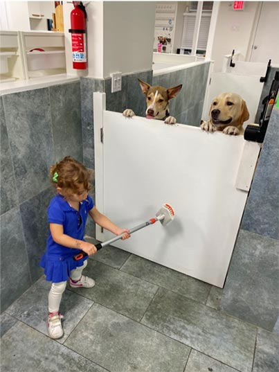 Mila participating in doggy daycare chores while pups Moby and Walter supervise