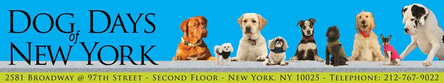 Dog Day Care Upper West Side