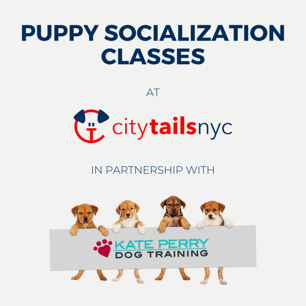 Puppy Socialization Class at City Tails dog daycare NYC1