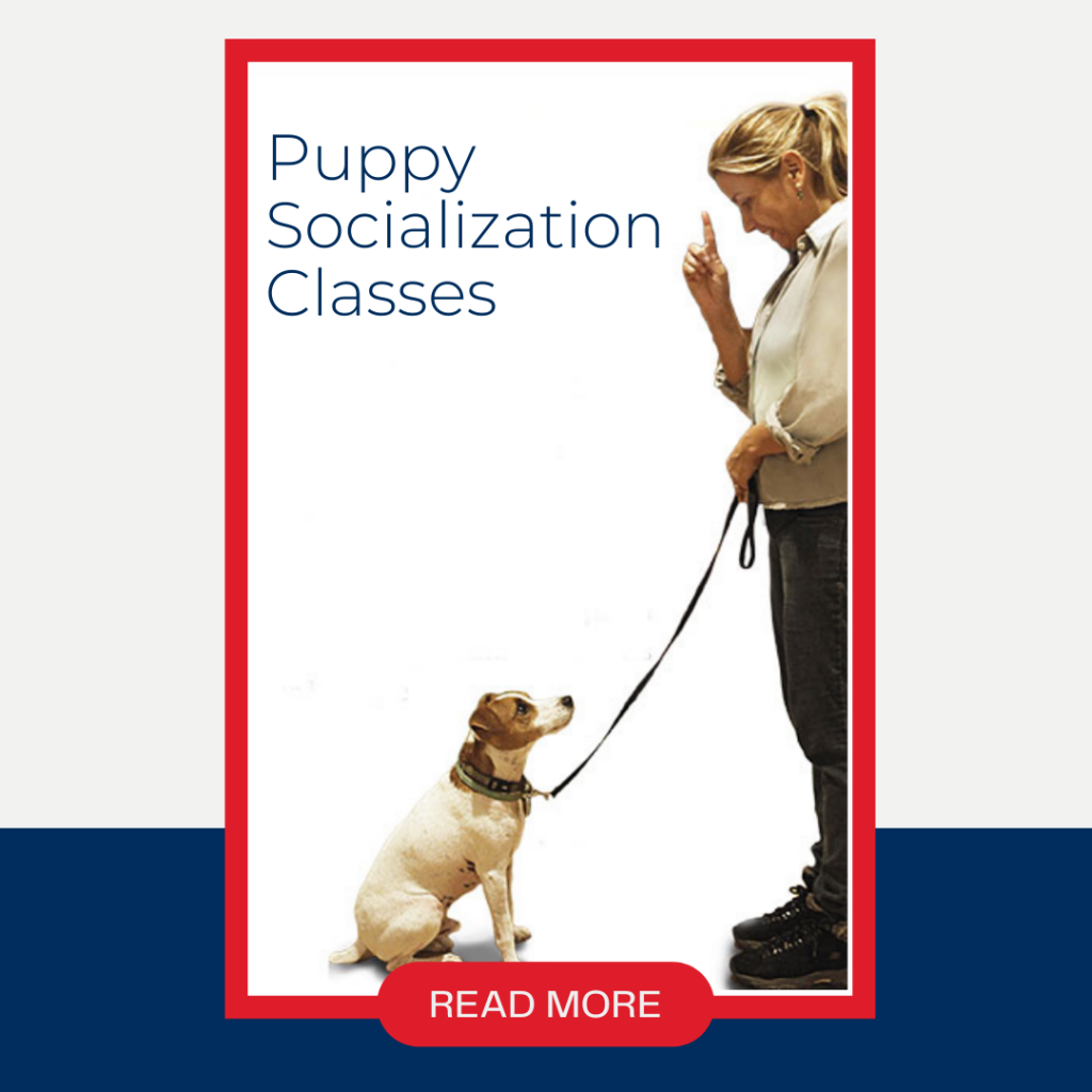Puppy Socialization Class at City Tails dog daycare NYC5