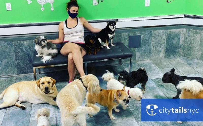 dog-daycares-nyc