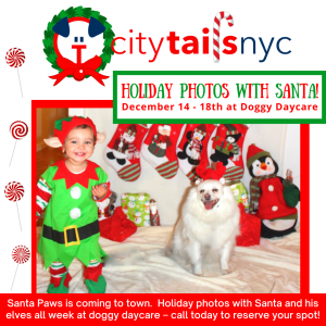 Holiday Photos with Santa at Dog Day Care West Village NYC - for IG